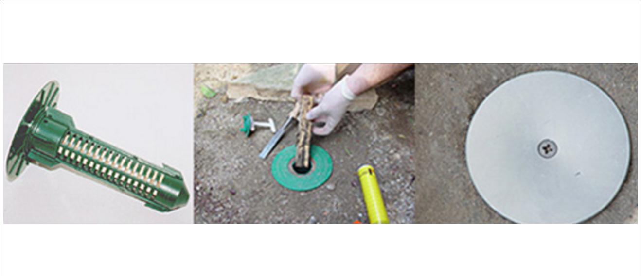 Eliminar y acabar con las termitas control plagas en sevilla - Acabar con las termitas ...
