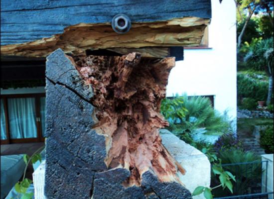 Consolidación de madera
