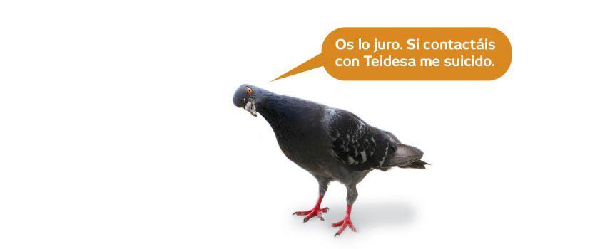 Las palomas como problema de salud pública