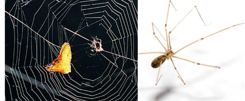 Eliminar y exterminar arañas en casa de manera rápida y segura