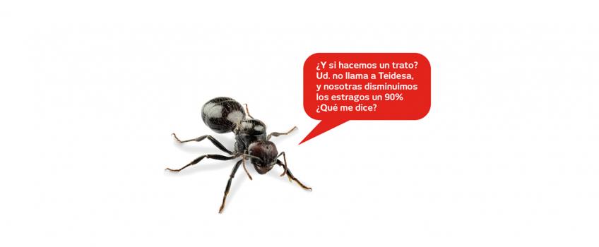 Eliminar Hormigas Sevilla | Tratamiento y Control  de la Plaga |