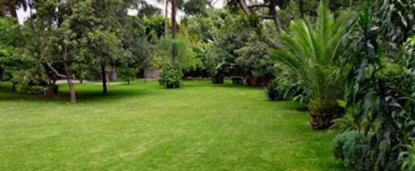 Mantenimiento de Jardines en Sevilla