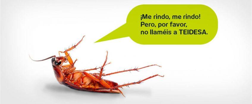 Eliminar Cucarachas Sevilla | Tratamiento de Plagas |Teidesa